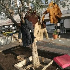 Cappotti appesi agli alberi per aiutare gli homeless