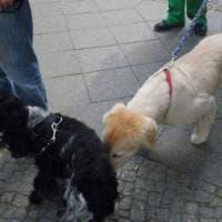 M5S raccoglie firme contro l'ordinanza sui cani di Savona