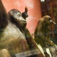 In natura nulla è come sembra, la mostra sul mimetismo nel mondo animale