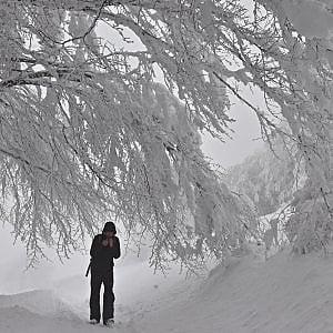 Neve in Liguria, imbiancati terrazzamenti alle Cinque Terre ...