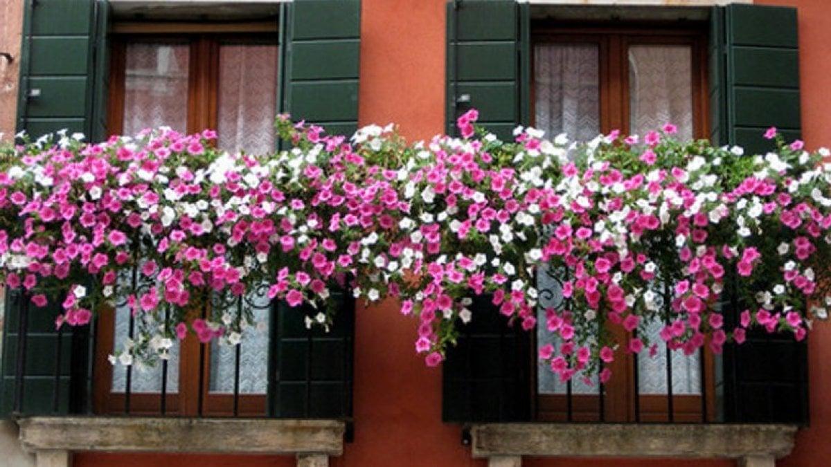 Euroflora il comune lancia il concorso 39 balconi fioriti for Terrazzi fioriti