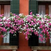 Euroflora, il Comune lancia il concorso 'Balconi fioriti'