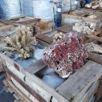 Guardia di Finanza e Dogane sequestrano 8 tonnellate di coralli