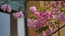 Genova, In città le prime fioriture
