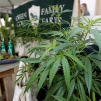 Manca la cannabis terapeutica, mille pazienti senza terapie