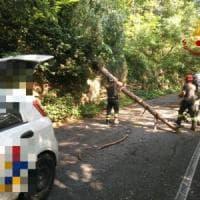 Genova, cade un albero su un'auto al Righi, ferito il conducente
