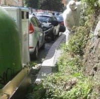 Il Comune: al via il piano straordinario per tagliare erbacce nelle vie