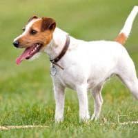 Alassio, il cane
