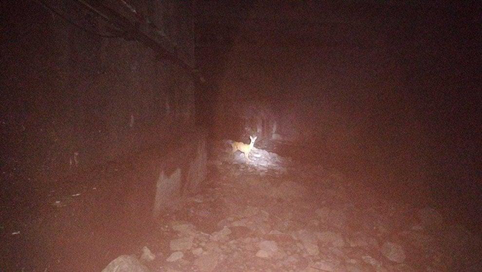 Bogliasco, capriolo ferito salvato dalla Vigilanza regionale