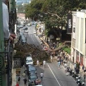 Sanremo, un albero secolare si schianta su via Roma