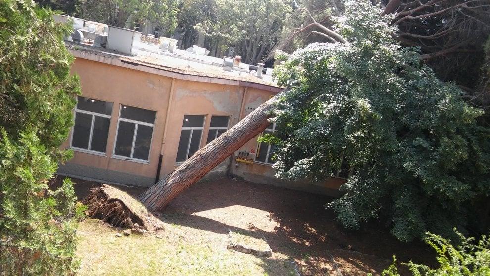 Crolla un enorme pino all'ospedale psichiatrico di Quarto, pazienti sfiorati