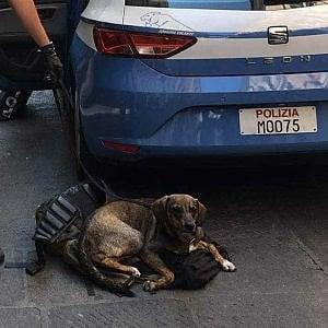 Proprietario di cane aggredisce poliziotto