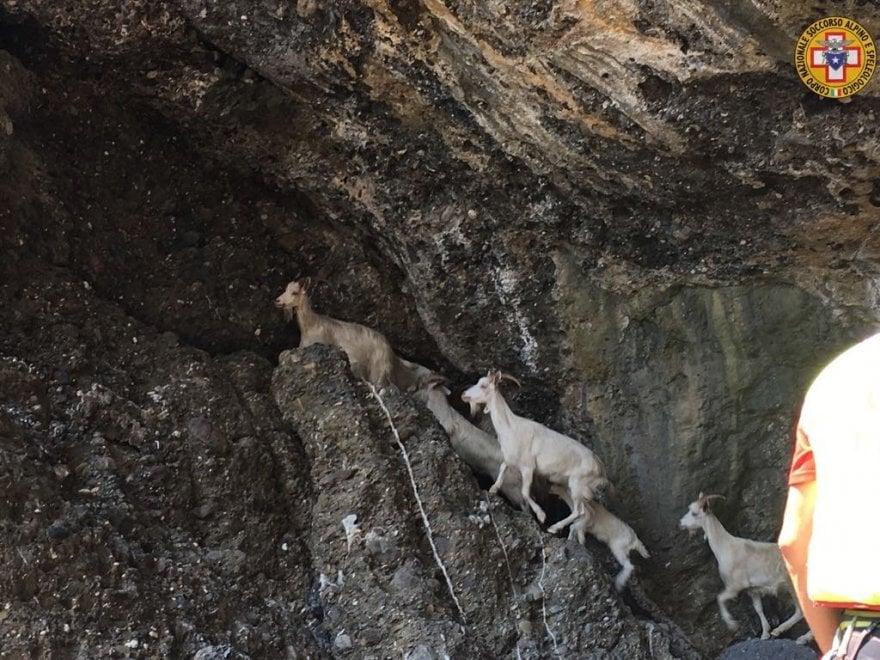 Monte di Portofino, il Soccorso Alpino per salvare una famiglia di caprette