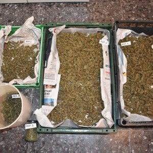 Rocchetta Nervina, un chilo di marijuana ad essiccare