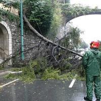 """La strage di seicento alberi. Il Comune: """"Adottate i tronchi"""""""