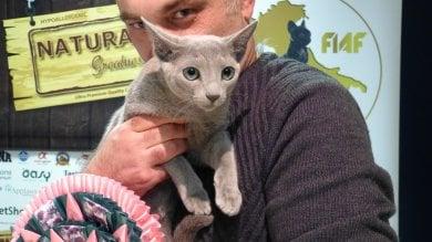Campionato mondiale dei gatti a Sanremo, vince Bluewind  Foto     Video