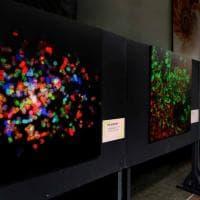 Pop Microscopy, quando la scienza diventa arte