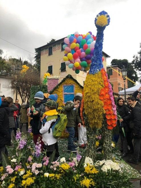 Sagra della mimosa, corsa e carri a Pieve Ligure