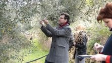 Seborga, l'ulivo  di 1.400 anni studiato  dai geobiologi    di ALESSANDRA CARBONINI
