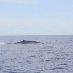 Aereo svuota 80 tonnellate di cherosene nel mar Ligure