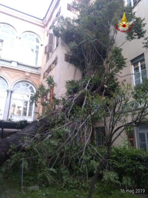 Albero cade su padiglioni ospedale Galliera, nessun ferito