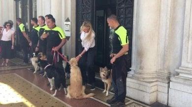 A Genova la prima sala operatoria mobile per i cani delle forze dell'ordine  Video     di FABRIZIO CERIGNALE