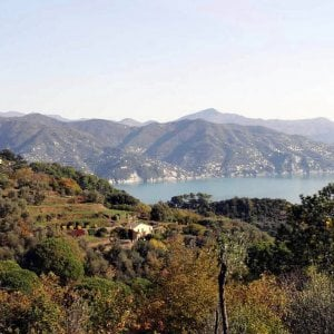 Ente Parco di Portofino, Marenco direttore