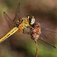 Le ali della libellula e le tele del ragno, le trasparenze della natura nelle foto di...