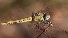 Le ali della libellula e le tele del ragno, le trasparenze della natura  Foto    d   i FABIO BUSSALINO