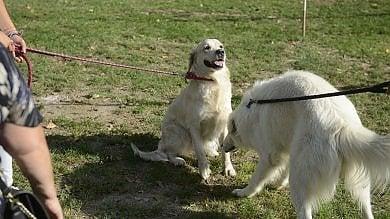 Cani, ora a Genova è allarme sulle polpette avvelenate