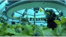 Il basilico sotto il mare è più verde   di ERICA MANNA