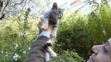 Salvati 150 gattini randagi dai volontari  di Sanremo    di ALESSANDRA CARBONINI