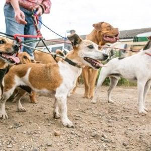 Duecento euro a chi adotta un cane