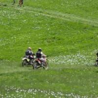 Sfregio all'Antola: motocross sui narcisi in fiore