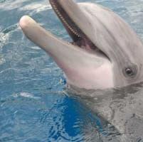 Acquario, muore un delfino nel giorno della riapertura