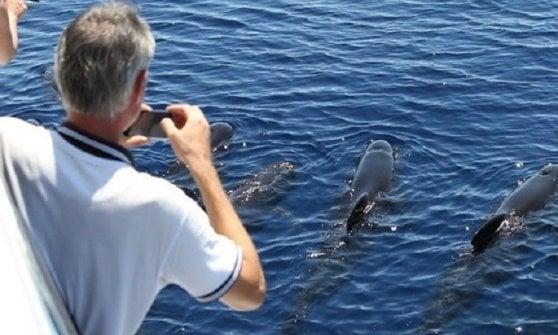 Biodiversità, Acquario di Genova e Wwf firmano un protocollo d'intesa