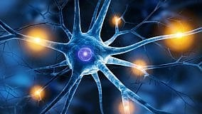 I neuroni delle emozioni  di ALBERTO DIASPRO