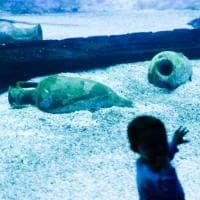 Acquario di Genova, anfore romane nella vasca degli squali