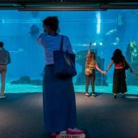 L'Acquario di Genova come un museo: resta aperto