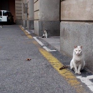 Milano, la colonia di gatti che ferma i lavori negli ambulatori del Fatebenefratelli