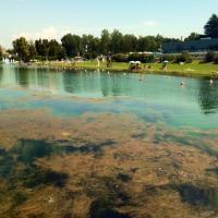 Milano, le alghe da record soffocano l'Idroscalo
