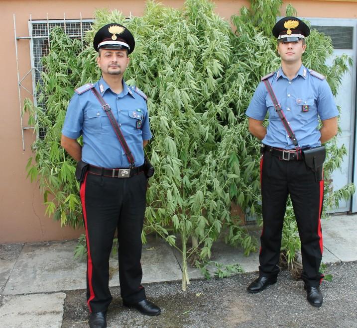 """Pavia, coltiva marijuana in giardino: """"E' anti-zanzare"""" - 1 di 5 - Milano - Repubblica.it"""
