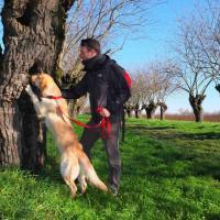 Teseo, il cane che scova i coleotteri da tutelare