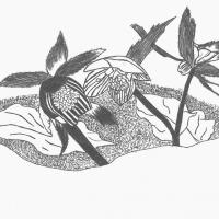 Bergamo, i detenuti disegnano le erbe lombarde