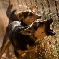 """Varese, polpette al topicida per i cani del vicino. Denunciata 50enne: """"Abbaiano troppo"""""""