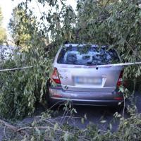 Forte vento a Milano, alberi caduti e auto danneggiate