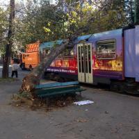 Milano, albero su un tram in viale Corsica: nessun ferito