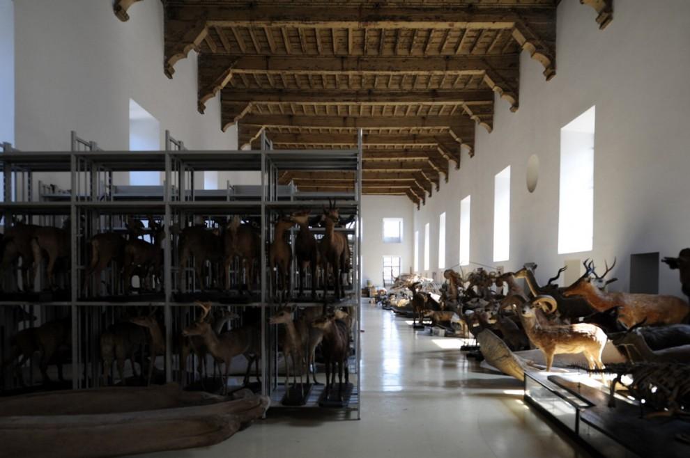 'I luoghi della cura', un viaggio negli antichi ospedali ...