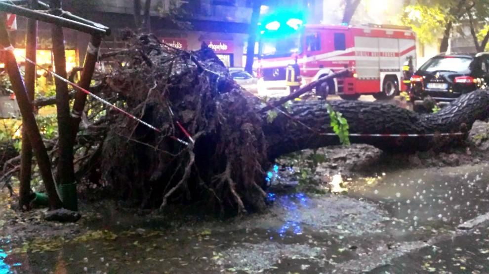 Maltempo, albero cade sulla via sfiora auto di passaggio