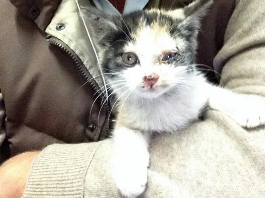 Brescia, chiusa la A4 per il salvataggio di una gattina